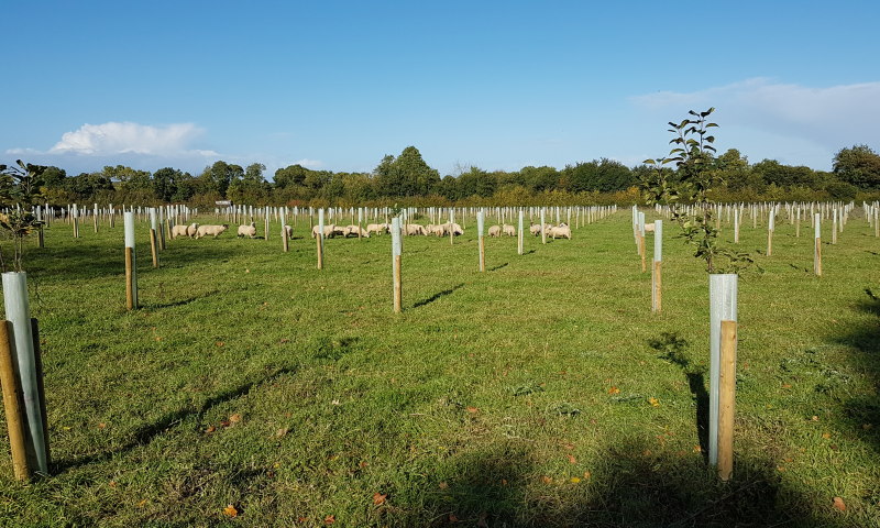 agroforestry-ireland