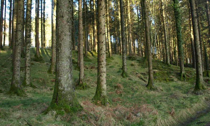 forest-management-contracts