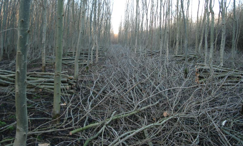 forestry-harvesting-1