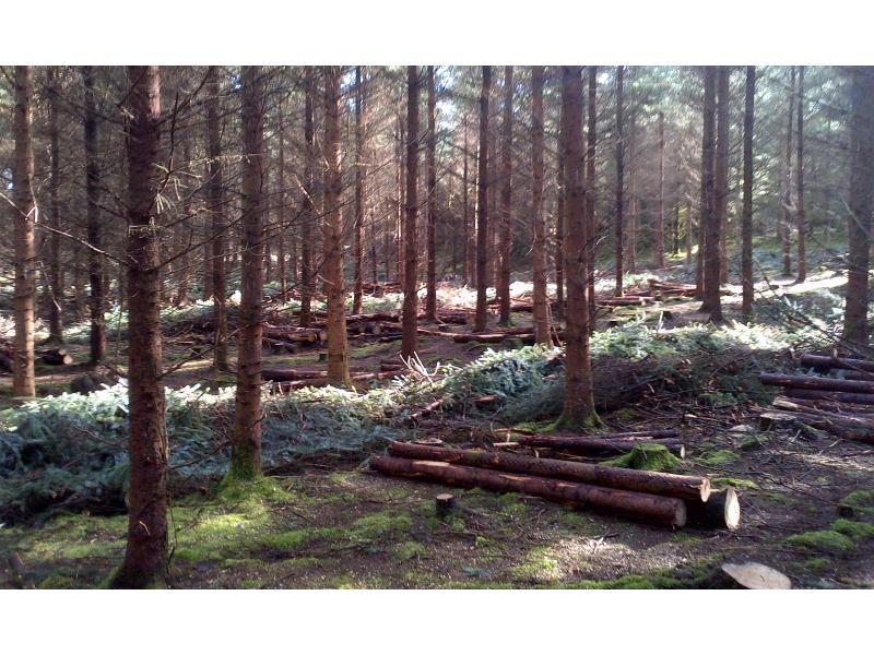forestry-harvesting