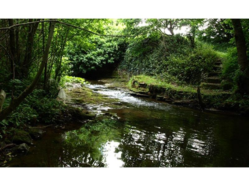 native-woodland-scheme