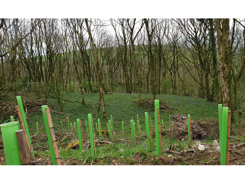 woodland-conservation